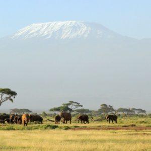 download HD Kilimanjaro Safari Wallpaper | Download Free – 123474