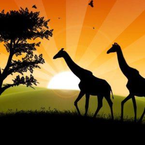 download Safari Wallpaper | HD Wallpapers Pro