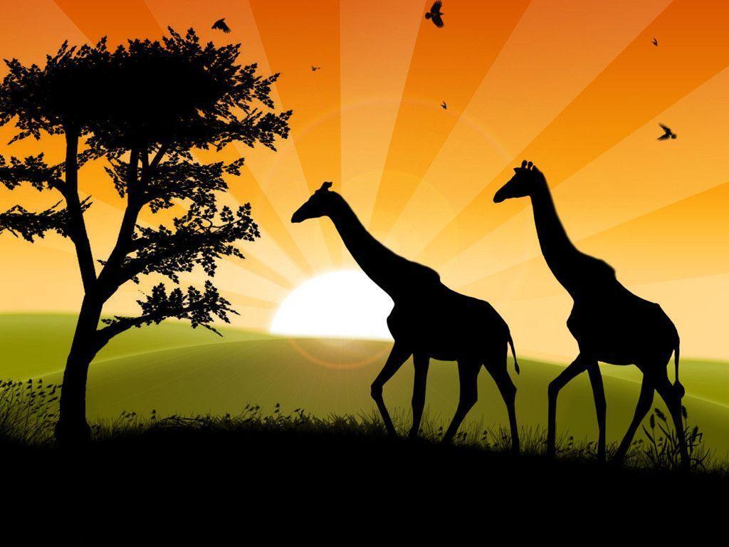 Safari Wallpaper   HD Wallpapers Pro