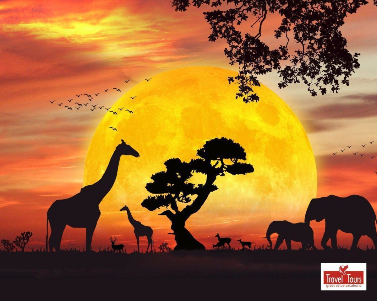 African Safari Live Wallpaper for Android 512x307PX ~ Wallpaper …