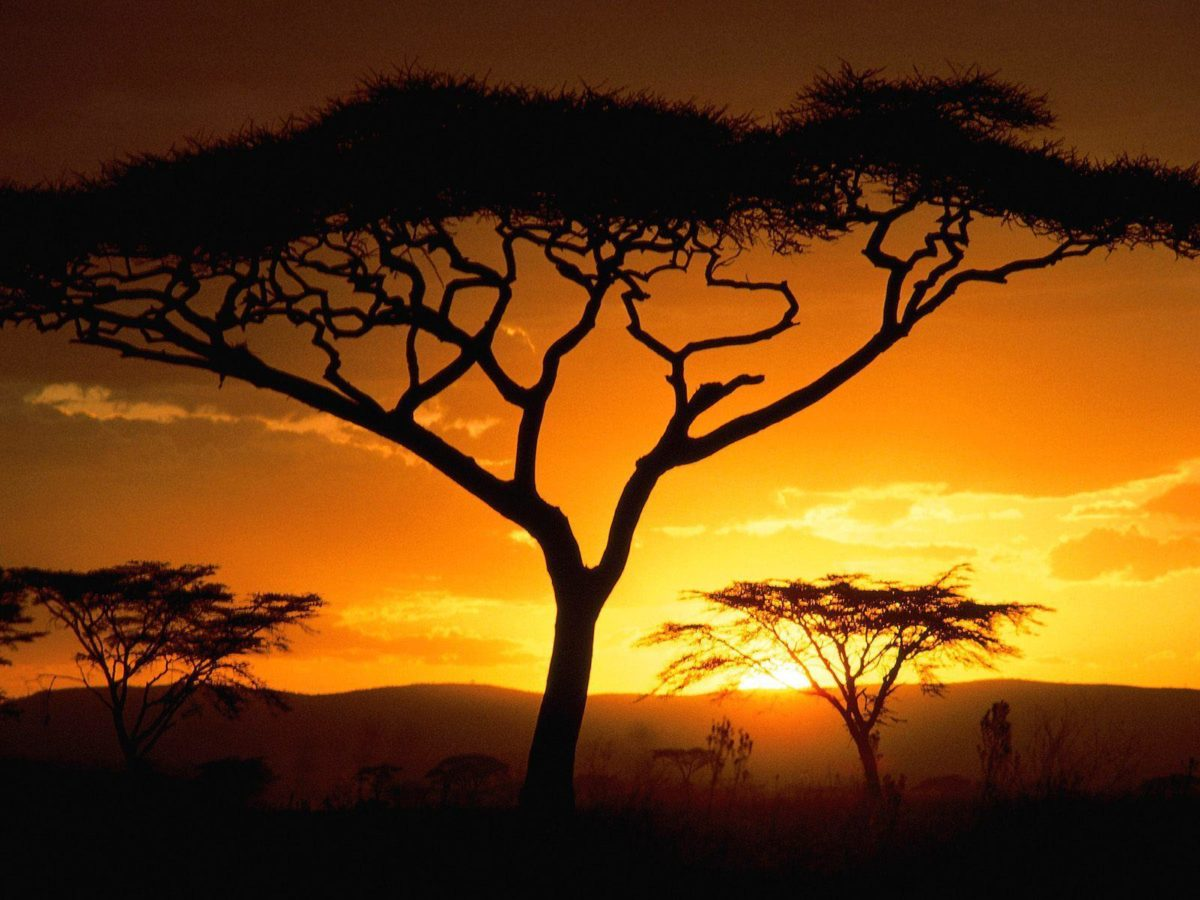African Safari Wallpaper – Viewing Gallery