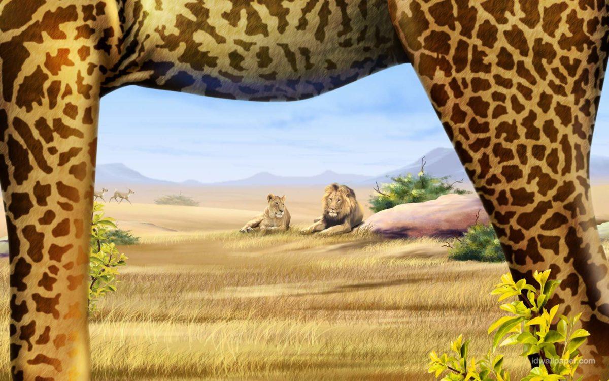 1 Safari Wallpapers   Safari Backgrounds
