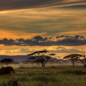 download Safari HD Wallpapers