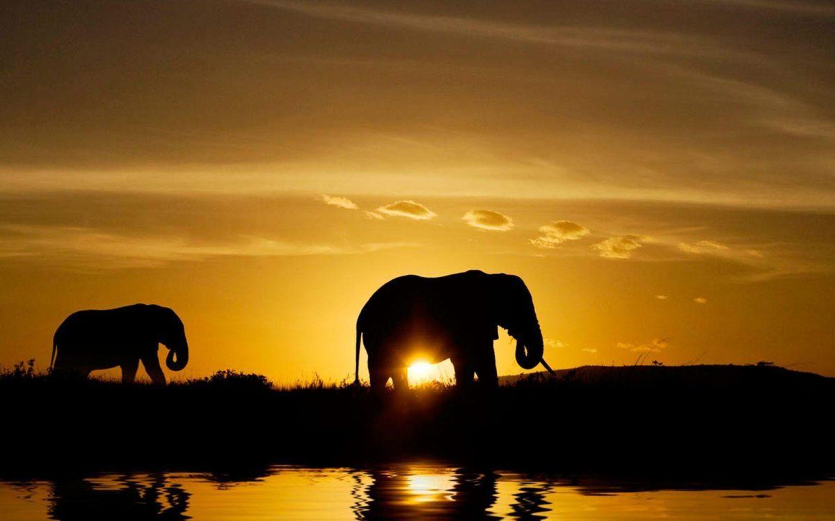Wild Animals Safari Images Wallpaper – Animal Powericare.