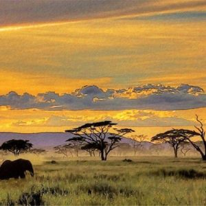 download African Safari Wallpaper yvt2 (1) by T-Douglas-Painting on DeviantArt