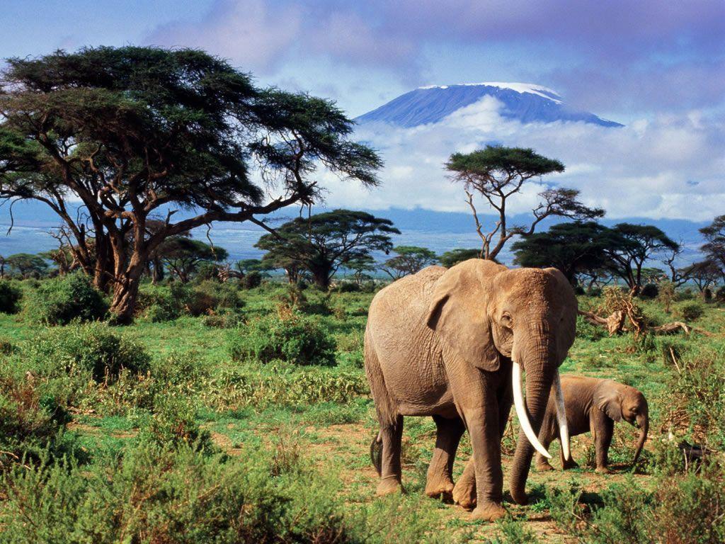 Safari HD Wallpapers