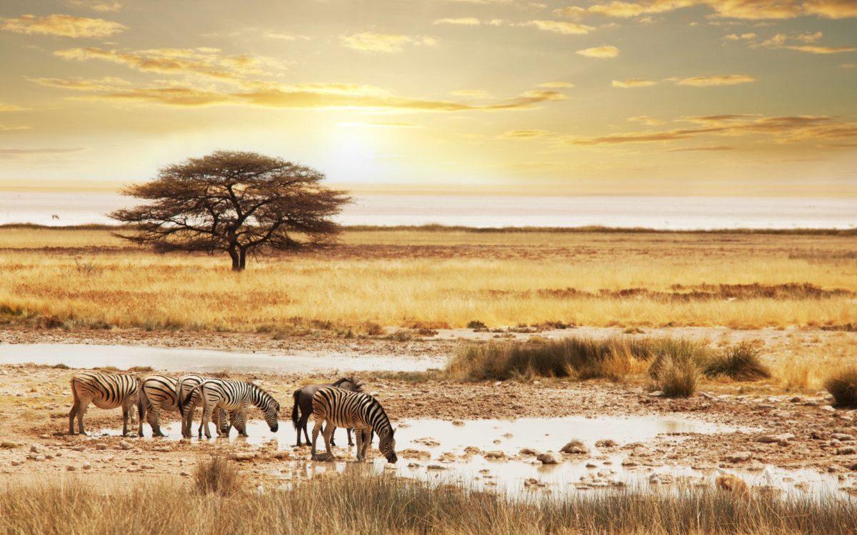 Namibia Safari Wallpapers