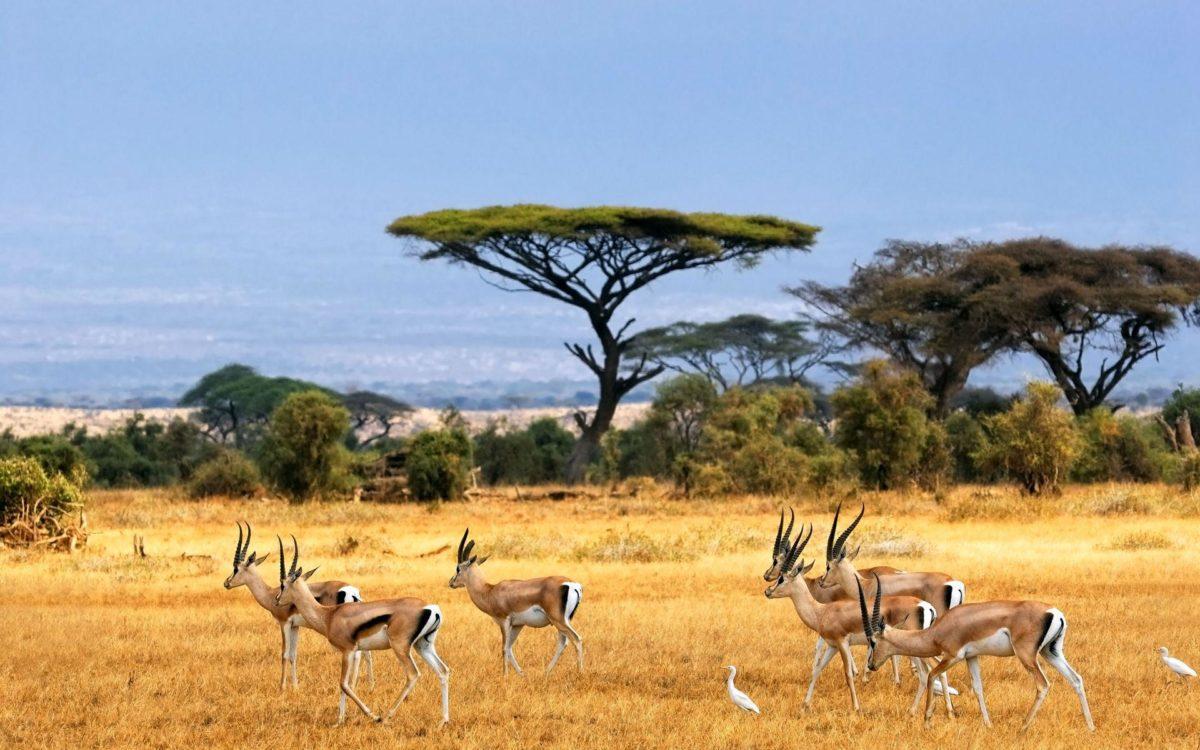 African Safari Wallpaper – iBackgroundWallpaper