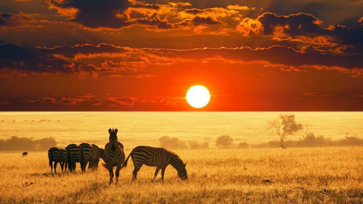 Wild Animals Safari Background Wallpaper – Animal Powericare.
