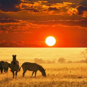 download Wild Animals Safari Background Wallpaper – Animal Powericare.