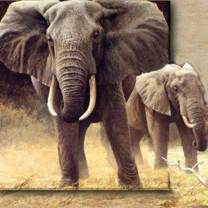 download Safari Wallpapers   HD Wallpapers Image