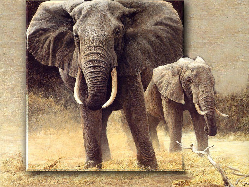 Safari Wallpapers   HD Wallpapers Image