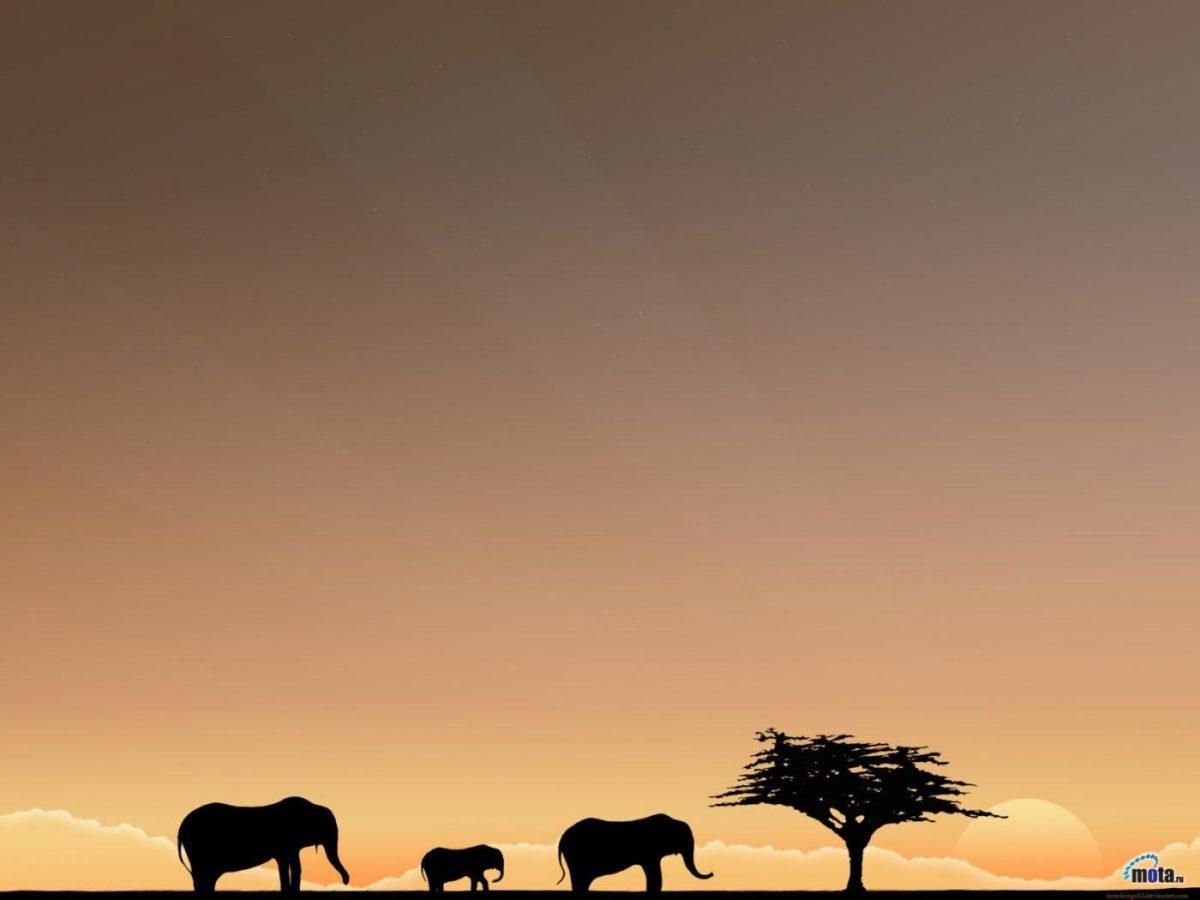 Africa Safari Photos Normal 4:3 1400×1050