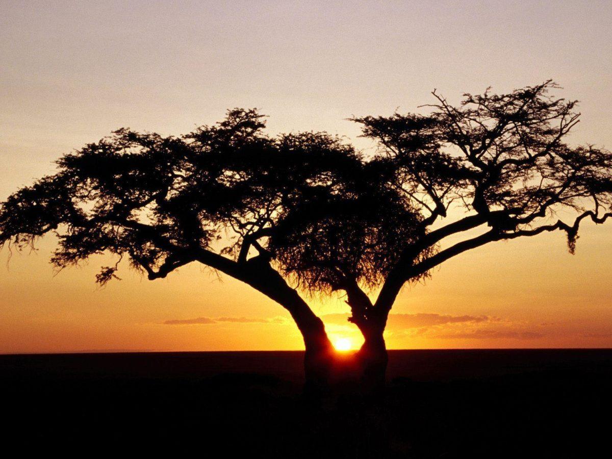 HD Wallpapers: 1600×1200 » Nature » Safari Sunrise, Africa Free …