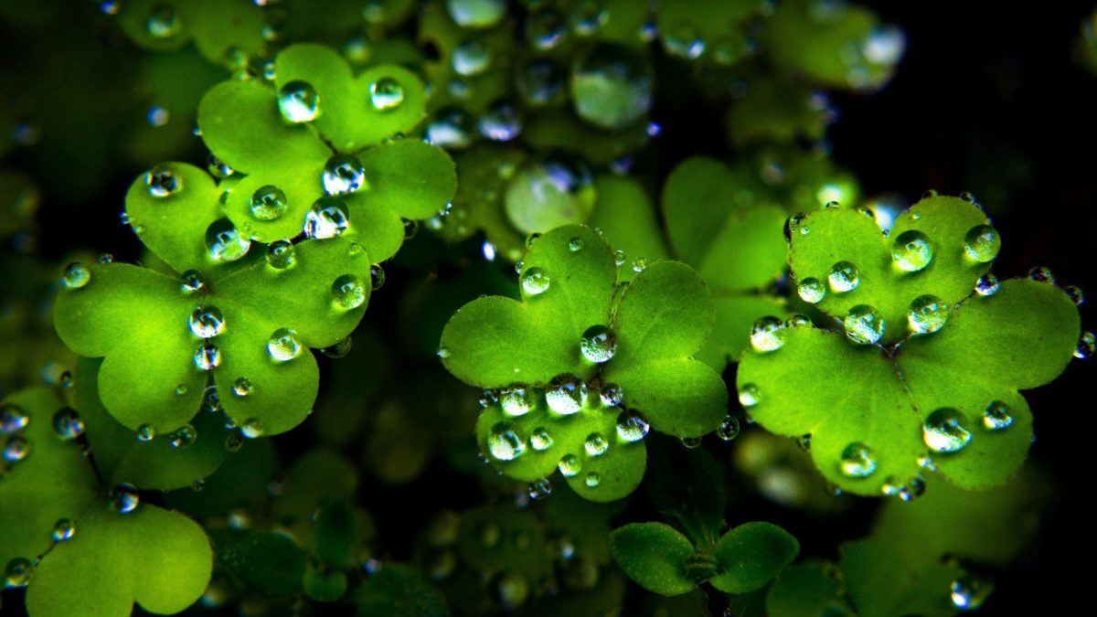 St. Patrick's Day on Pinterest | 19 Pins