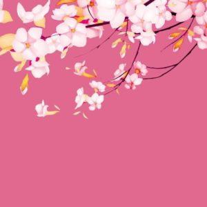 download sakura.flower-wallpaper – Dhoomwallpaper.com   Latest HD Wallpaper …