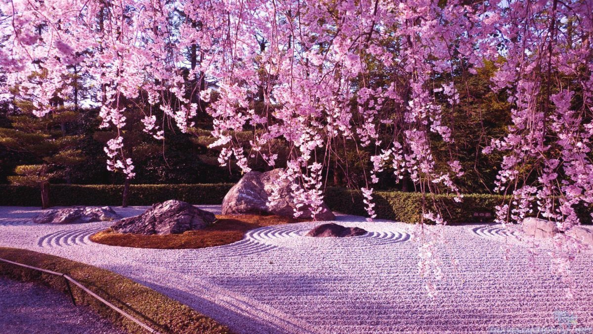 10 Gorgeous pictures of Cherry Blossom Lake, Japan | Art …