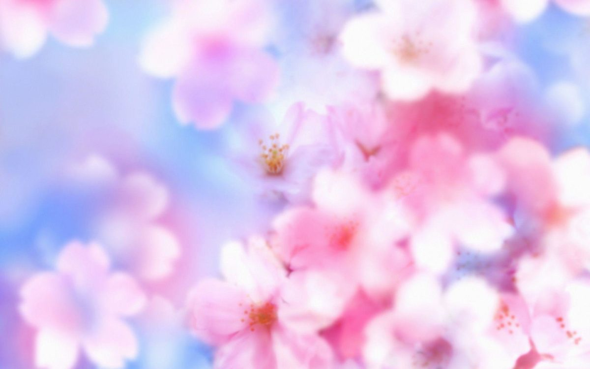Most Downloaded Cherry Blossom Wallpapers – Full HD wallpaper search