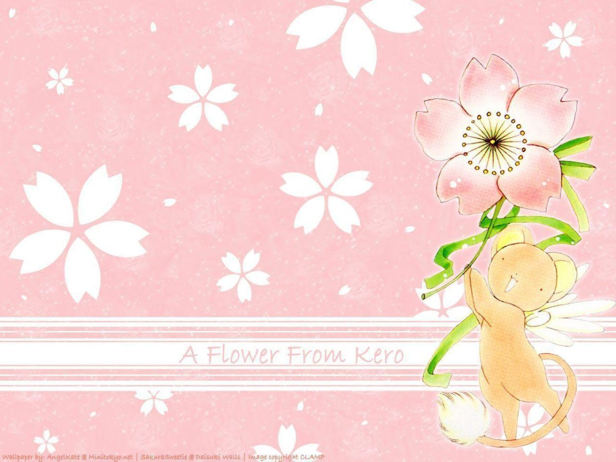 A flower from Kero – Cardcaptor Sakura Wallpaper (5022194) – Fanpop