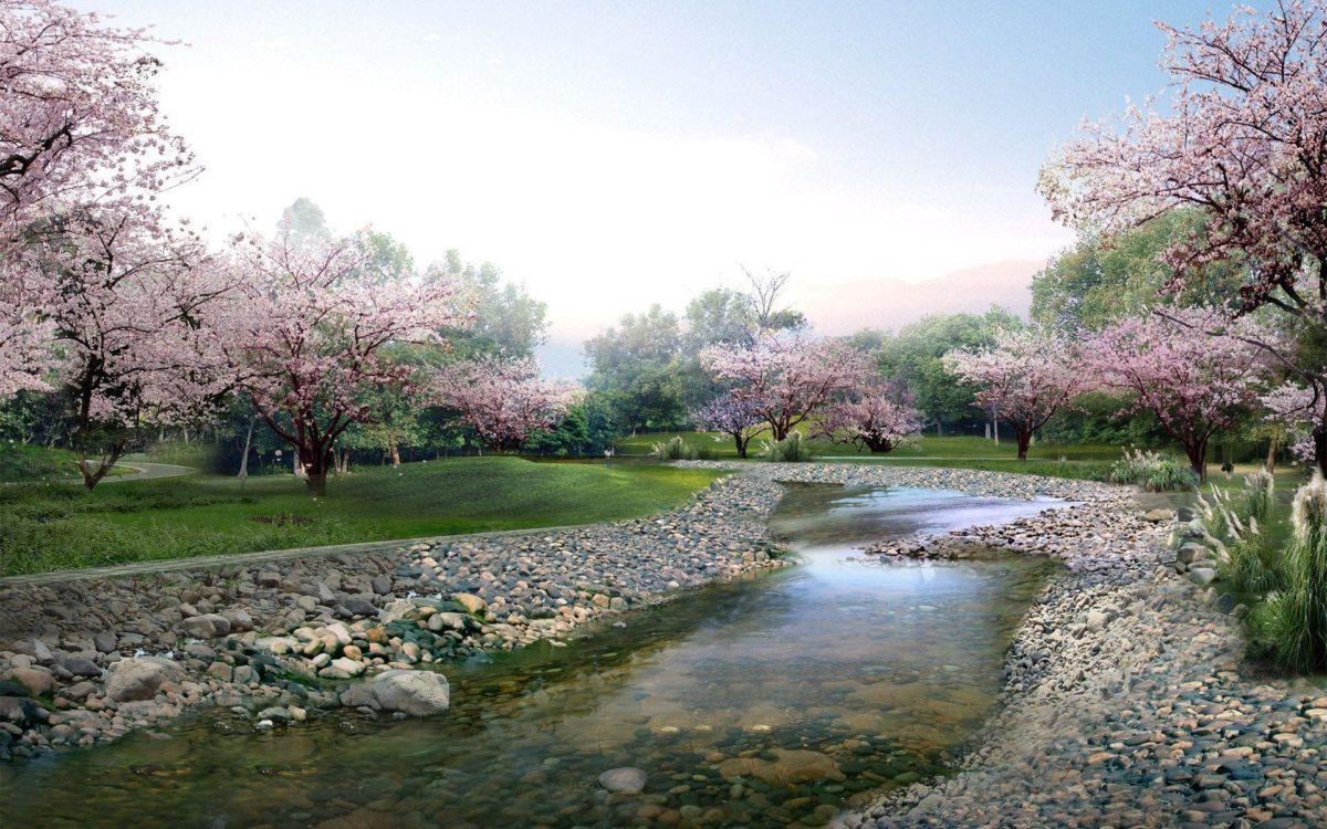 Beautiful Sakura Flower Wallpaper 15323