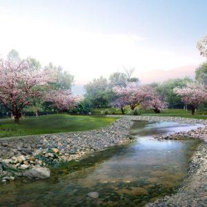 download Beautiful Sakura Flower Wallpaper 15323