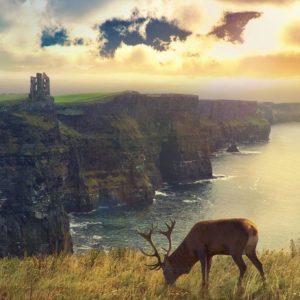 download Scotland Wallpapers | Best Wallpapers