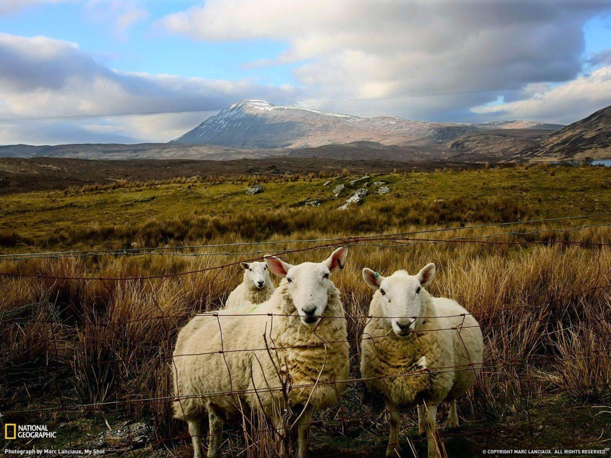 Free Scotland Wallpaper – WallpaperSafari