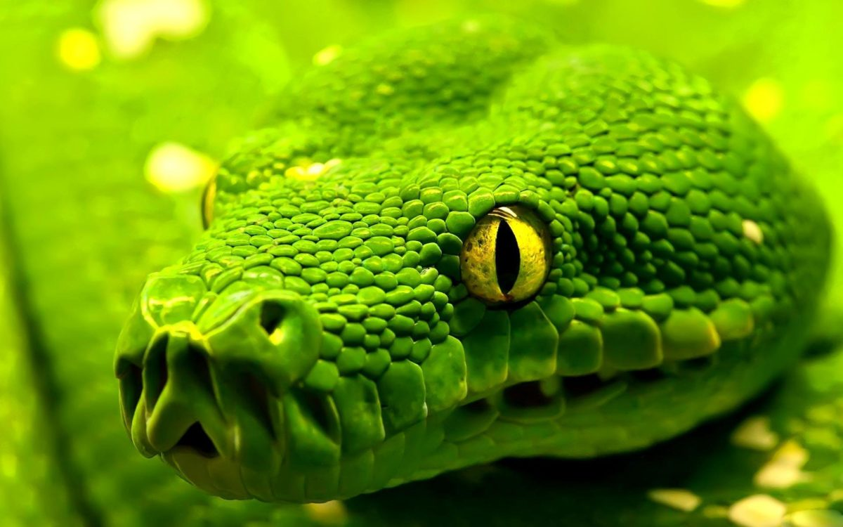 Most Downloaded Snake Wallpapers – Full HD wallpaper search