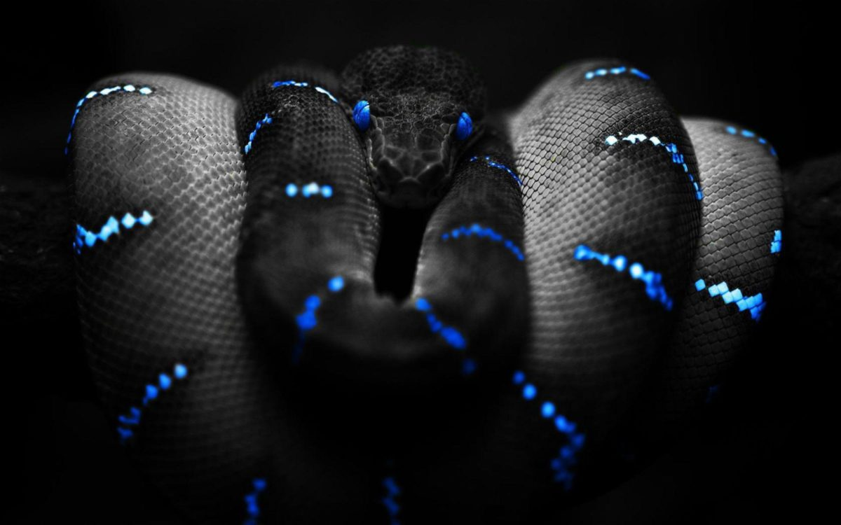 Snake Desktop Wallpaper | Snake HD Images | New Wallpapers