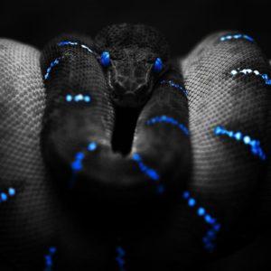 download Snake Desktop Wallpaper | Snake HD Images | New Wallpapers