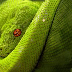 download Astonishing Snake Desktop Wallpapers 1600x1200PX ~ Snake Wallpaper #