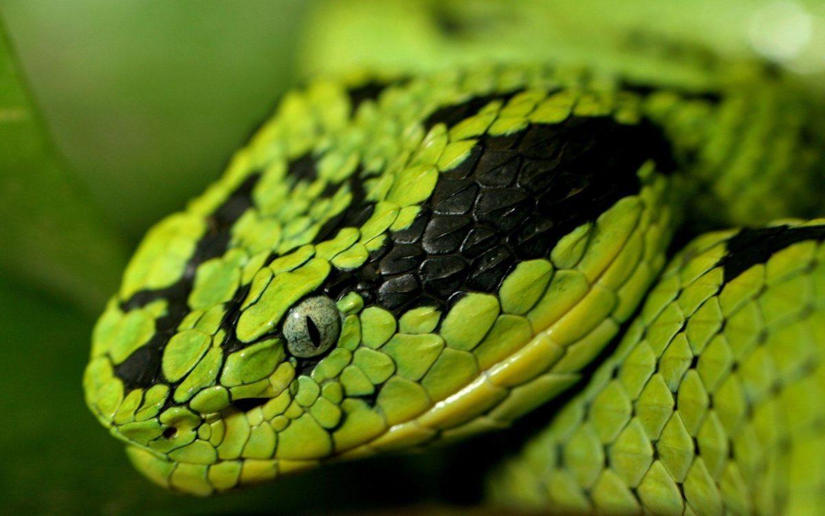 Snake wallpaper – 562657