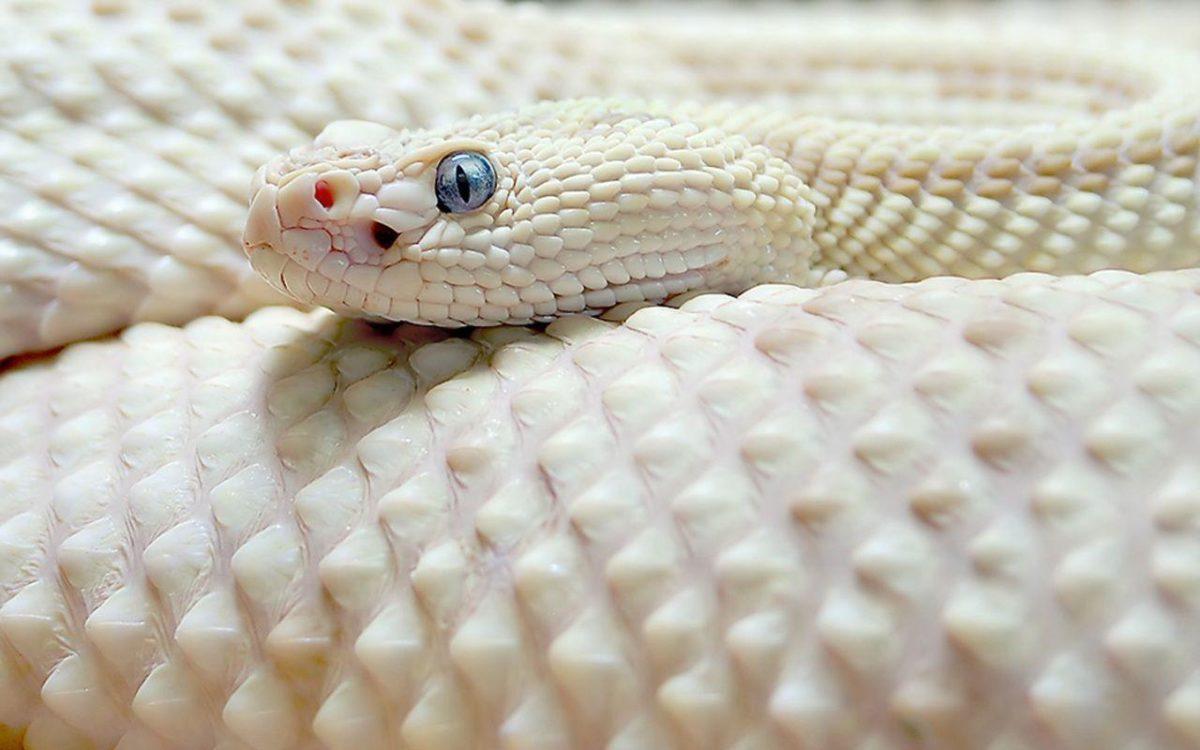 280 Snake Wallpapers | Snake Backgrounds