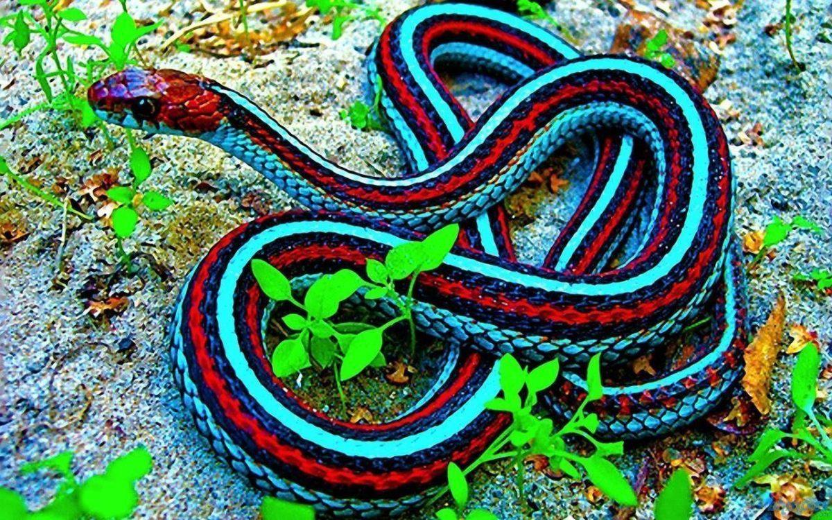 Black Mamba Snake HD Wallpapers – HD Wallpapers Inn