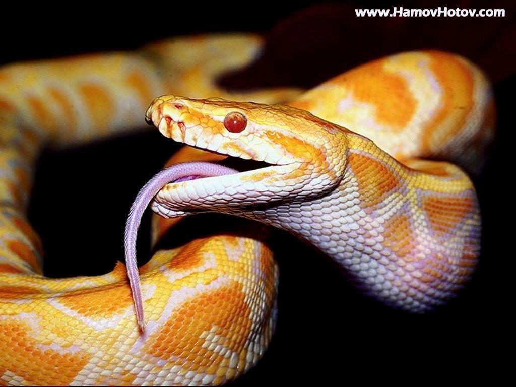 Android Phones Wallpapers: Android Wallpaper Dangerous Snake