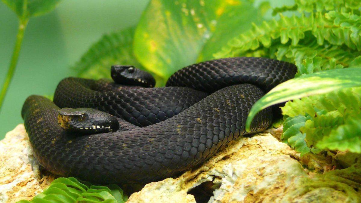 Black Mamba Snake Wallpapers | Black Mamba Snake Wallpapers HD …