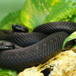 download Black Mamba Snake Wallpapers | Black Mamba Snake Wallpapers HD …