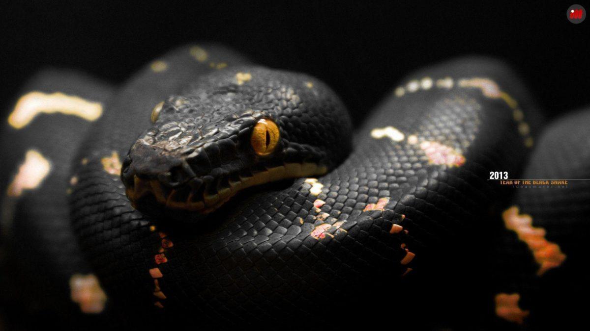 Black Snake wallpaper – 874616
