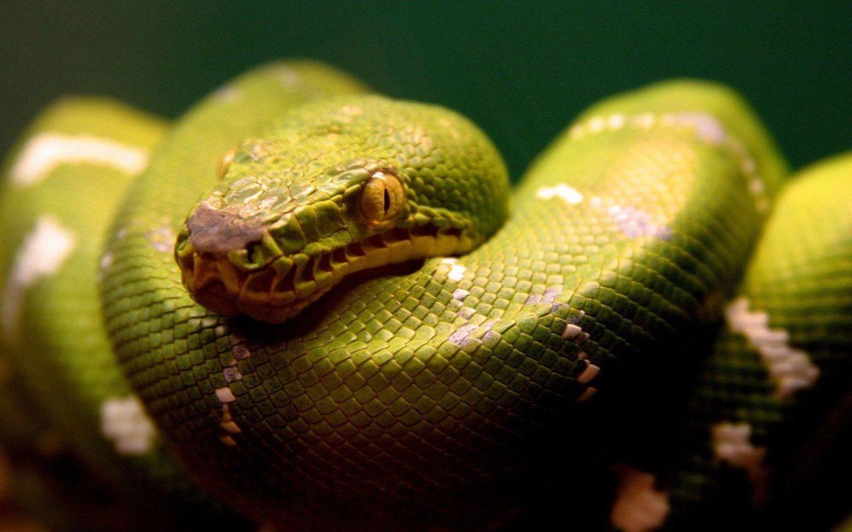 Snake wallpaper – 839568