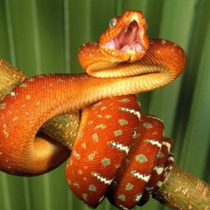 download Best Jungle Life: Deadly Snake Wallpapers And Pictures