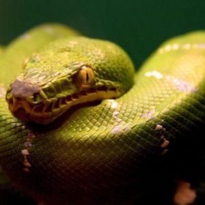 download green snake Wallpaper – Animal Backgrounds