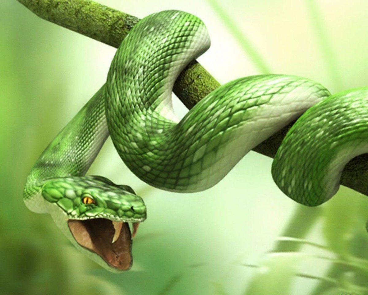 Green 3d Snake HD Wallpapers – HD Wallpapers Inn
