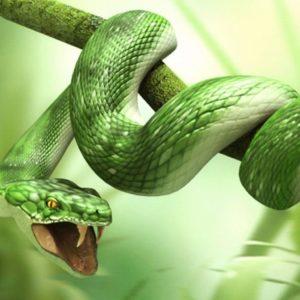 download Green 3d Snake HD Wallpapers – HD Wallpapers Inn