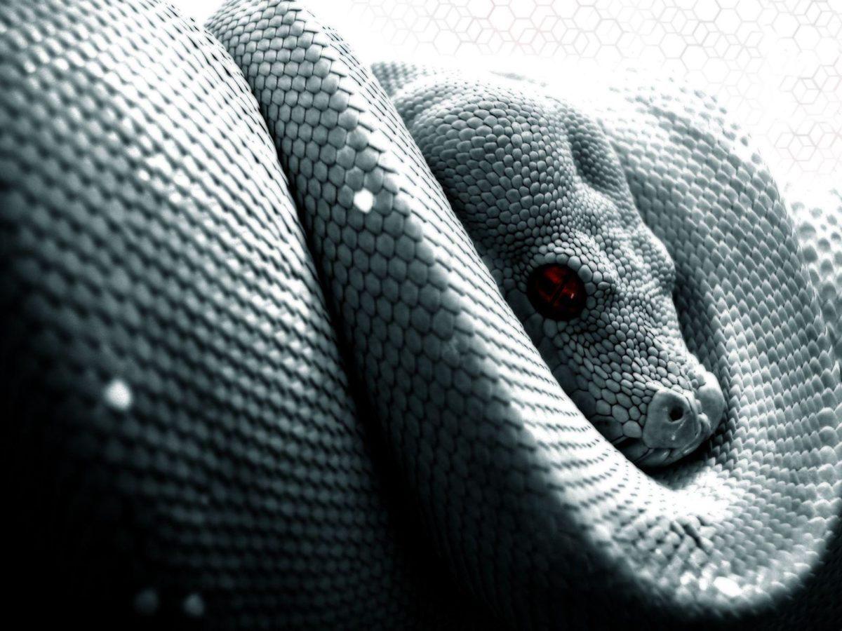 Snake Computer Wallpapers, Desktop Backgrounds 1600×1200 Id: 26823