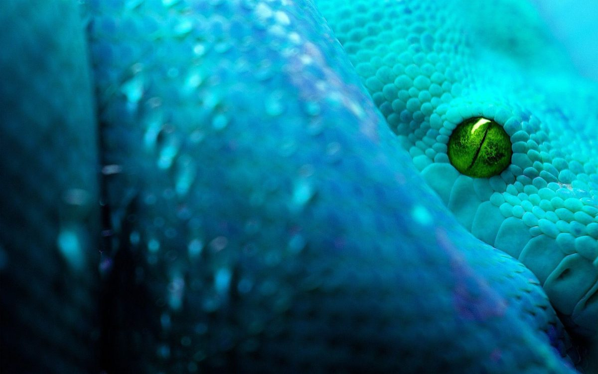 Snake HD Wallpapers Free Download | HD Free Wallpapers Download