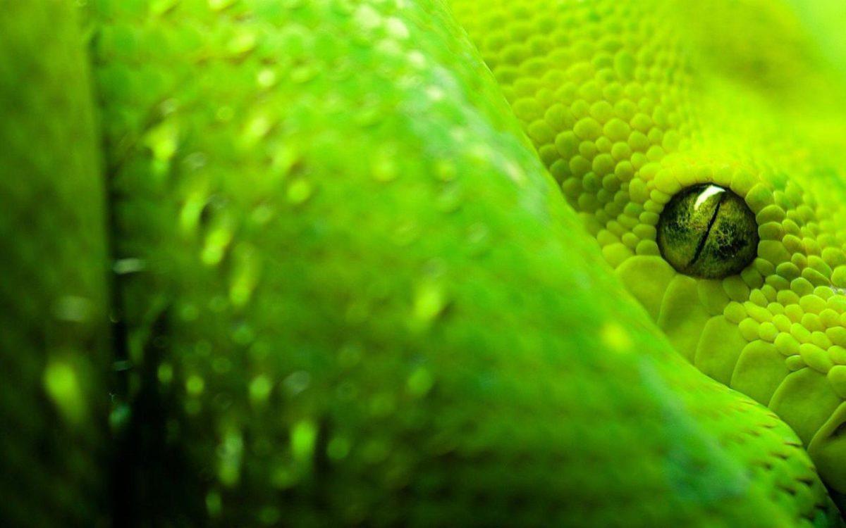 snake wallpaper | snake wallpaper – Part 6