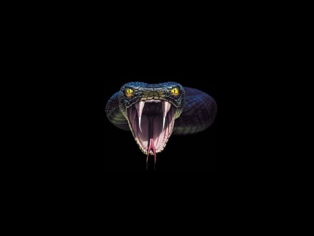 Animals For > Cobra Snake Wallpapers