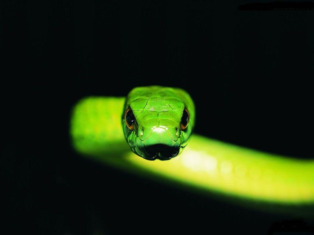 Bamboo snake Wallpapers – HD Wallpapers 2982