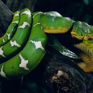 download Snake Wallpapers: Different Family Type Of Sna (2029) – HD Desktop …