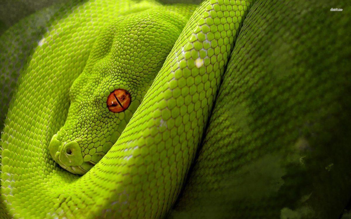Snake red eyes wallpaper | Last Wallpaper